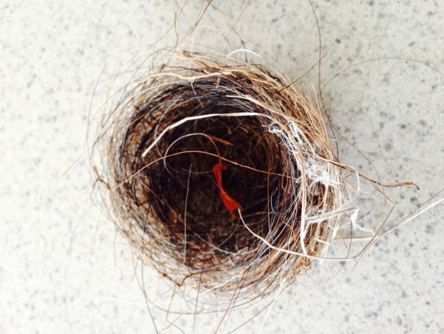 Tiny horsehair nest with red