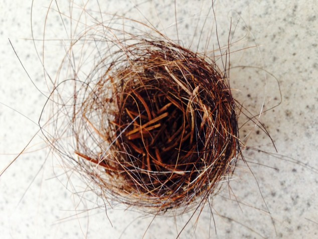 Tiny horsehair nest with pine twigs