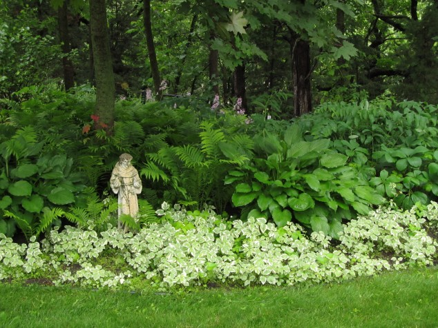 Hostas and St. Francis