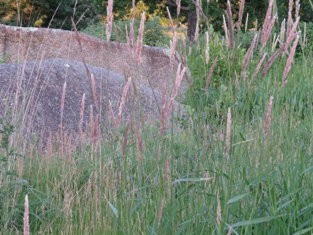 Granite boulder and grasses