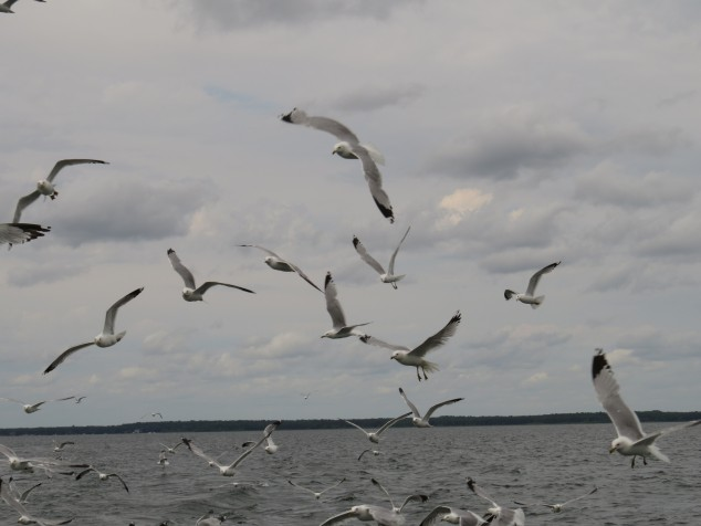 Seagulls and horizon