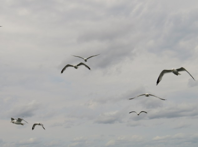 Seagulls in clouds
