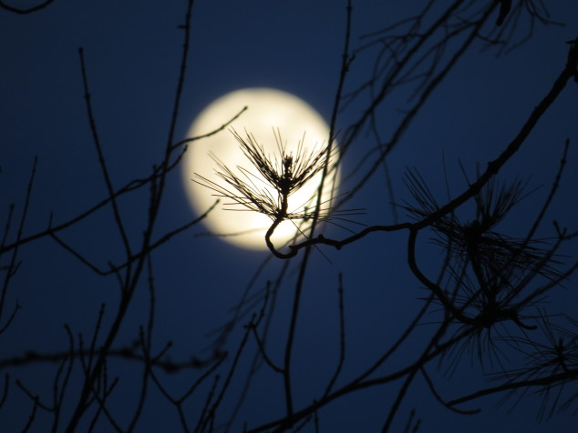pine against the moon