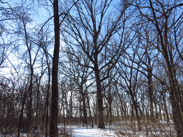 Woods at Rockville County Park