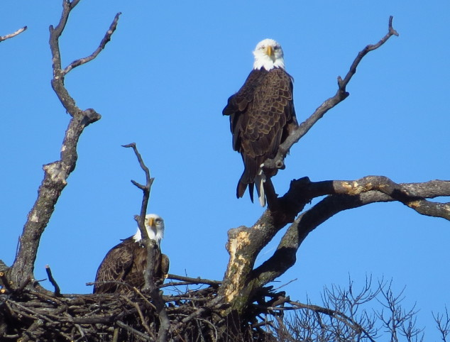 Eagles looking at me