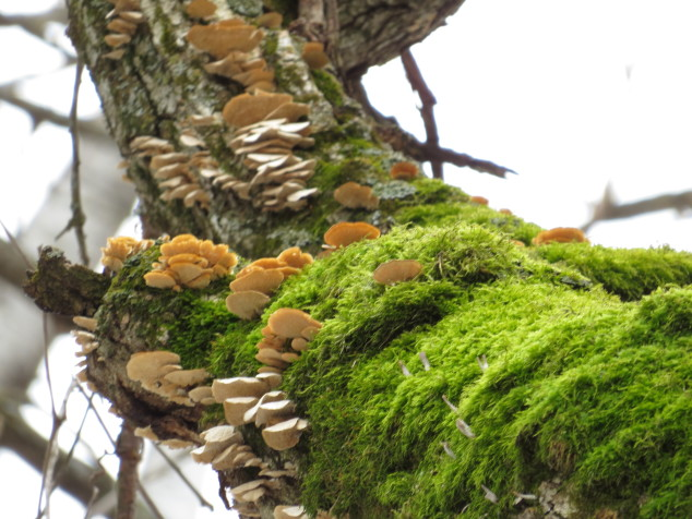 Moss and fungi on an oak branch