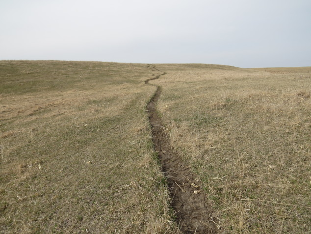 Cow path in the pasture