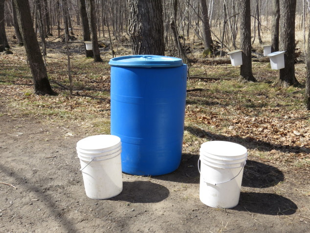 Sap collection buckets and barrels