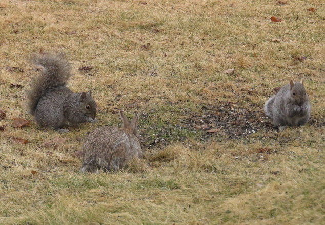Squirrels and rabbit