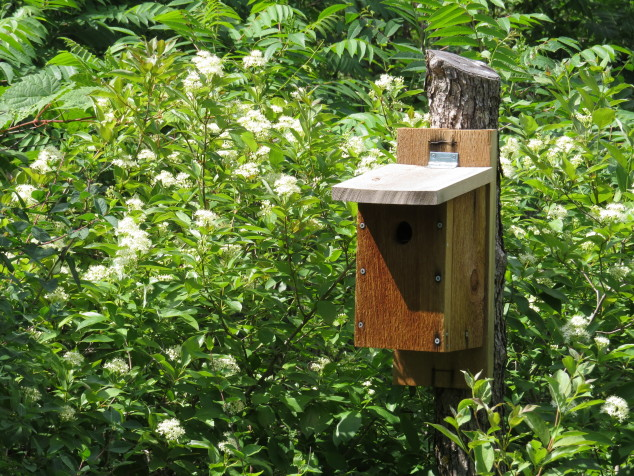 Gray dogwood blooms and birdhouse