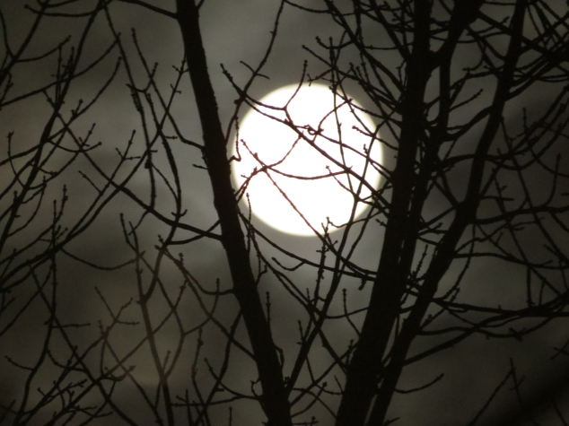 Christmas full moon through branches