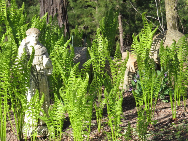 Ferns and St. Francis