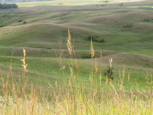 Indian Grass at Glacial Lakes State Park
