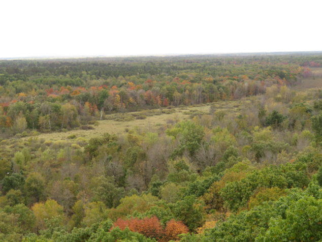 At the top of fire tower at St. Croix State Park