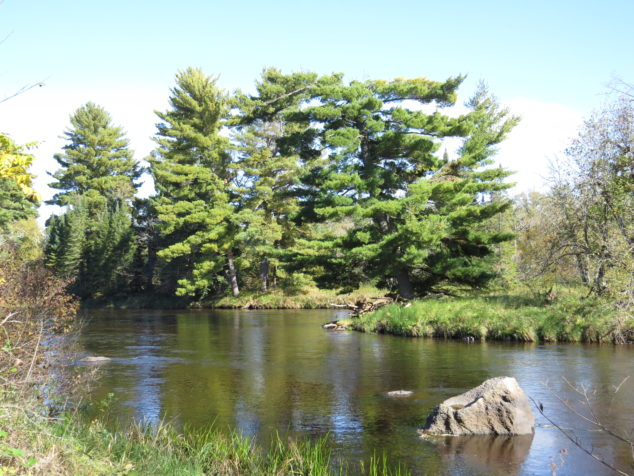 Pines on Wisconsin side of St. Croix River