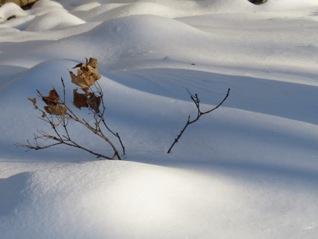 Branch in the snow