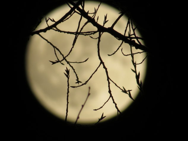Super Moon behind branches